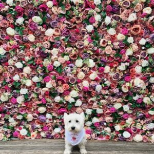 Flower Walls (From £125)